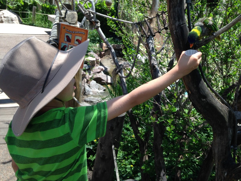 Jude, partially hidden under his new hat, giving the lorikeets some lunch