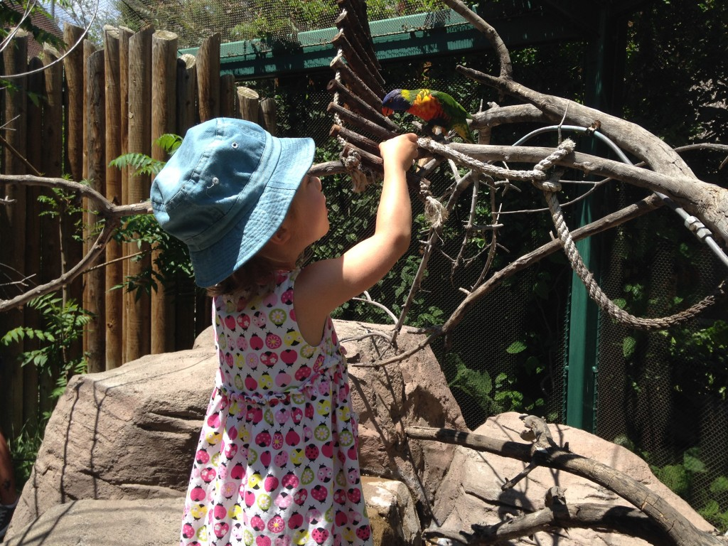 Anna feeding the rainbow lorikeets at the Denver zoo