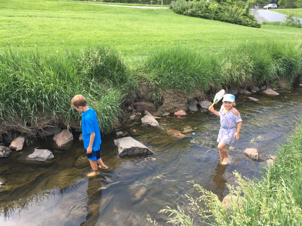 Searching for crawdads in Harvard Gulch