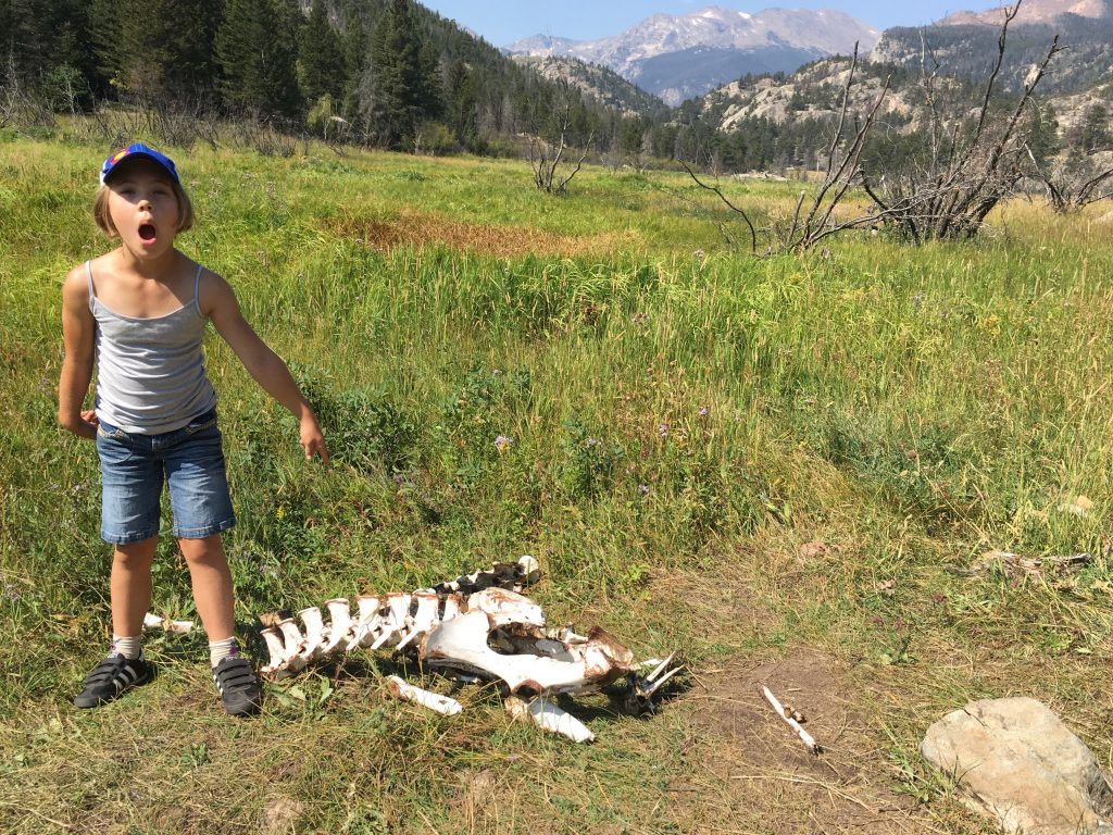 Anna discovered a skeleton of what we think is an elk by the trail
