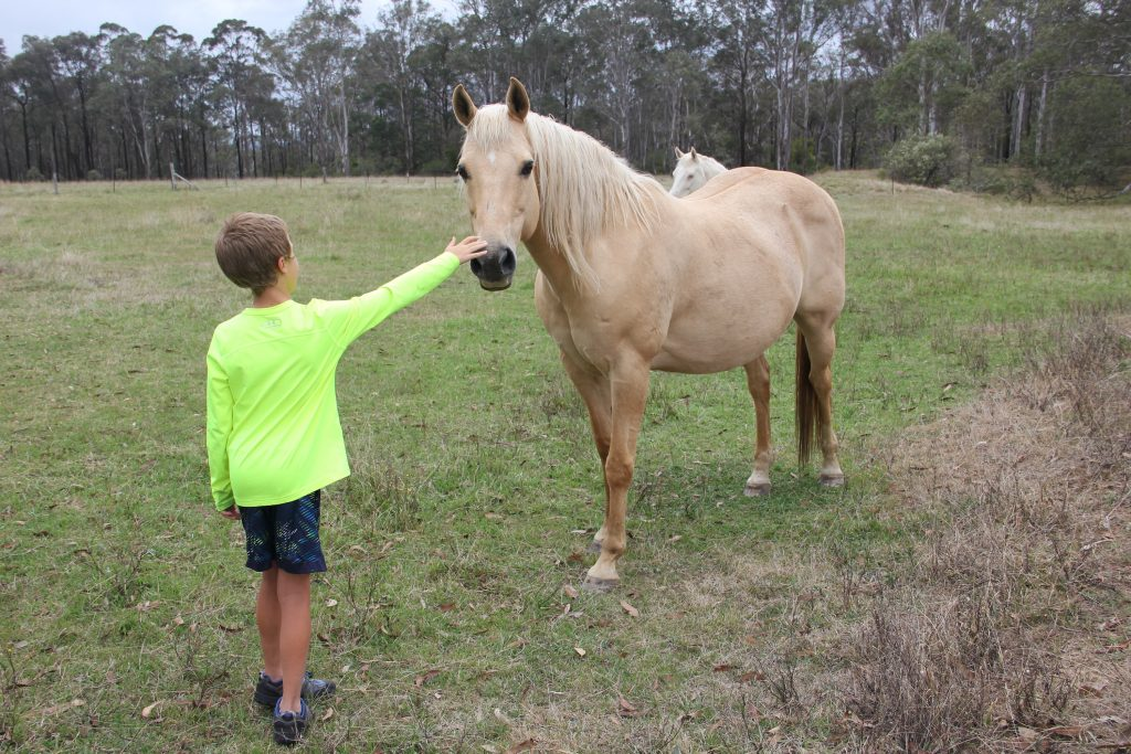 Jude petting Bud, their young and frisky horse